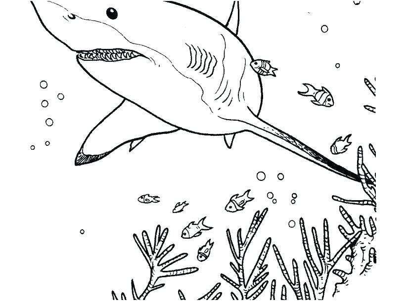 shark coloring sheet