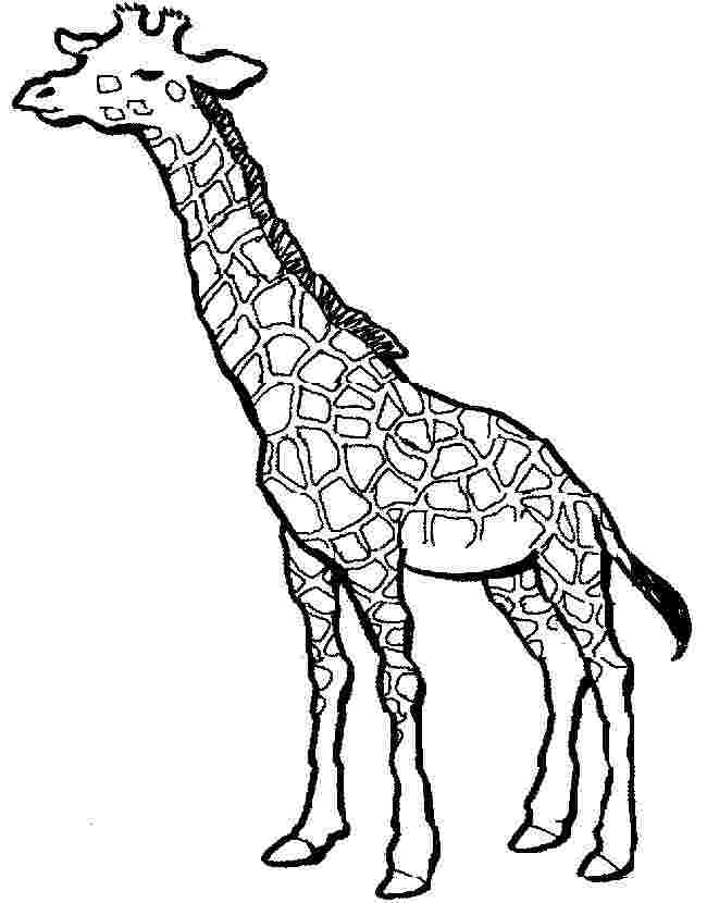 simple giraffe coloring pages coloring page of a giraffe