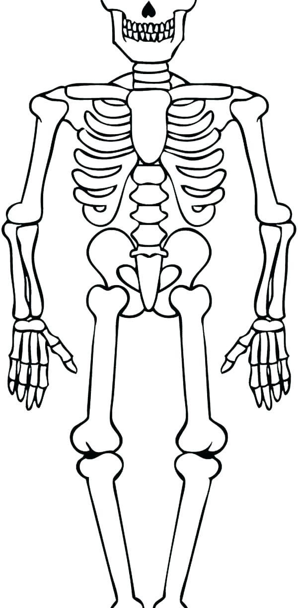 skeleton coloring page uwcoalition