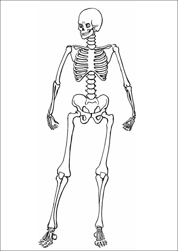 skeleton coloring picture inspirational photos free