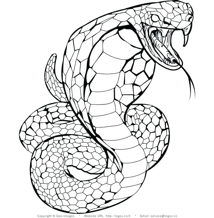 snake coloring pages to print at getdrawings free for