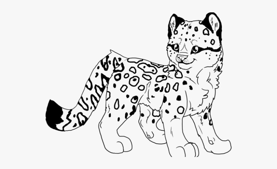 snow leopard clipart color ba snow leopard coloring