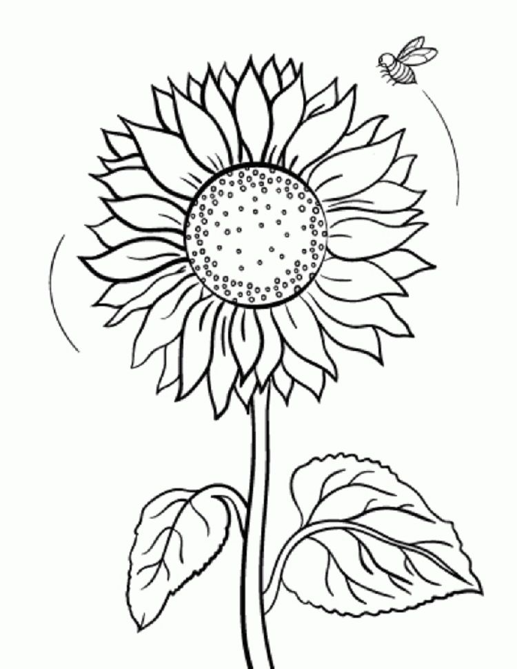 sunflower coloring pages bee coloring pages