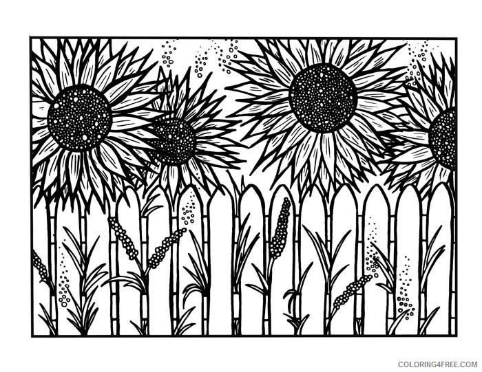 sunflower coloring pages behind the fence coloring4free