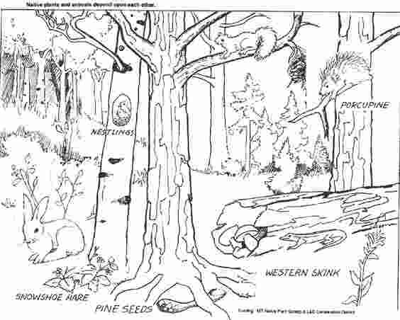 temperate forest coloring pages deciduous forest animals