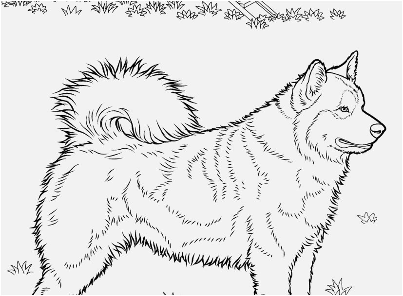 the most effective pictures husky coloring pages excellent