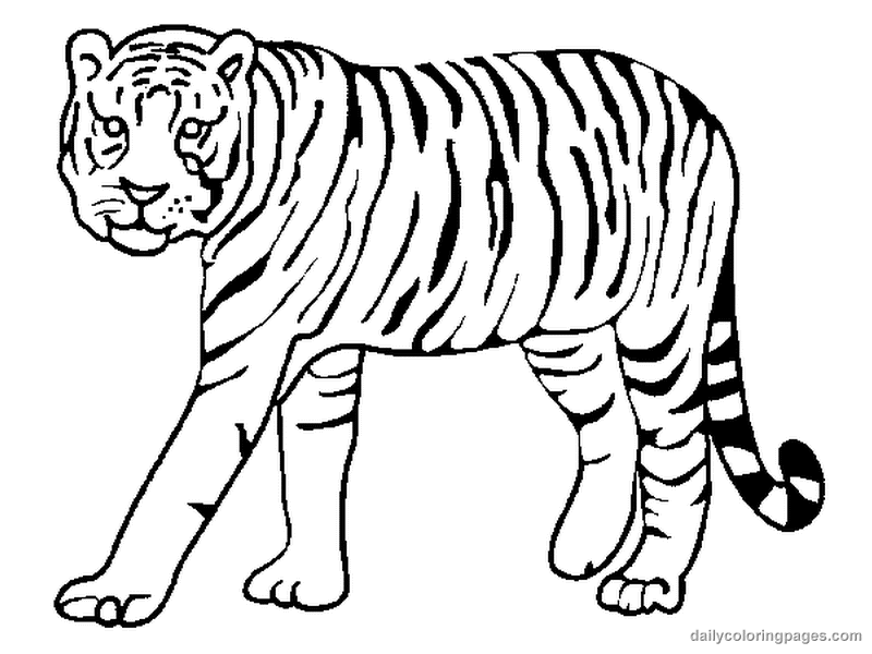 tiger 5 animals printable coloring pages