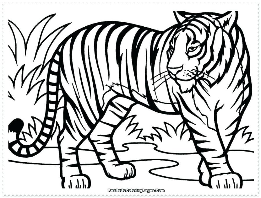 tiger coloring pages for adults at getdrawings free