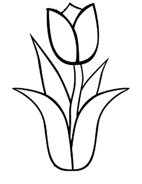 tulip 38 nature printable coloring pages