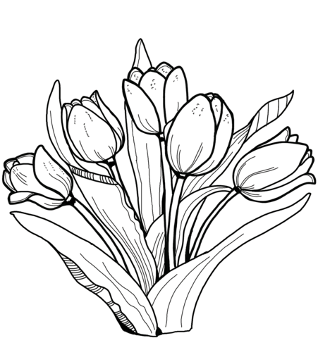 tulips coloring page free printable coloring pages