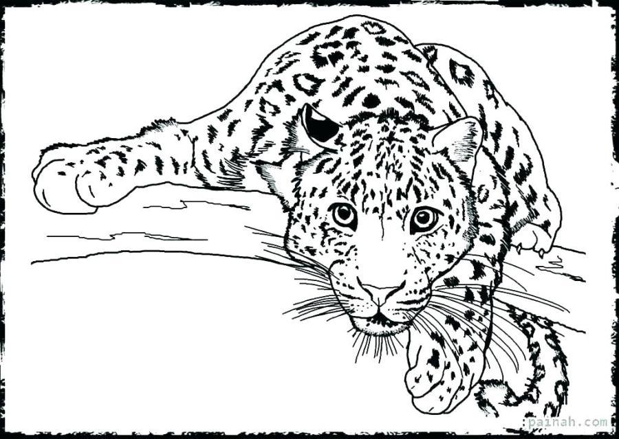 wild animals drawings color dancekicks