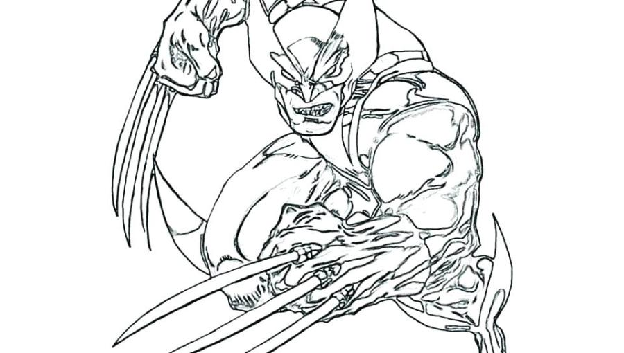 wolverine animal coloring pages at getdrawings free