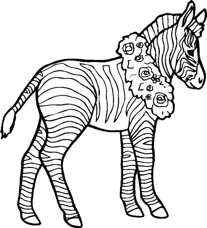 zebra 33 animals printable coloring pages
