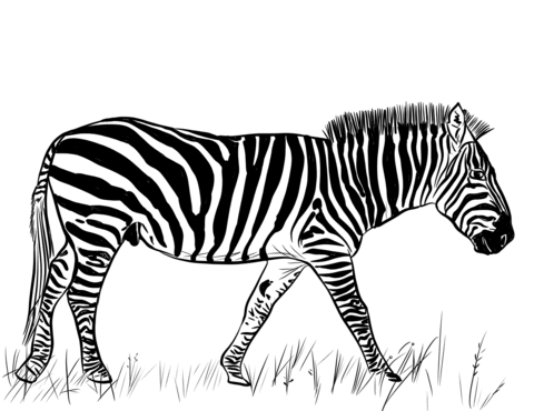 zebra coloring page free printable coloring pages