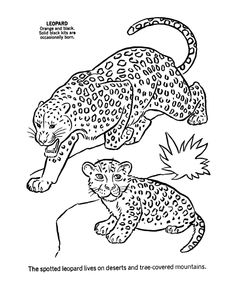 56 best coloring zoo images animal coloring pages