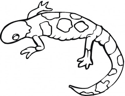 Lizard Coloring Pages - Download & Print Online Coloring Pages for Free |  Color Nimbus | 306x400