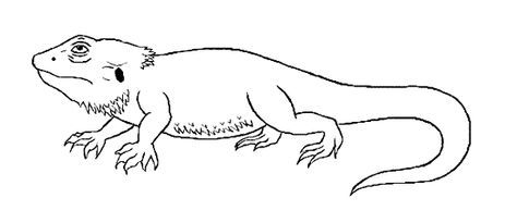 bearded dragon lizard coloring pages