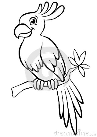 coloring pages birds little cute parrot stock vector