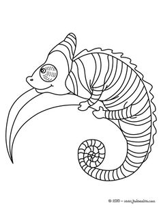 coloring pages lizard reptile lizard free printable