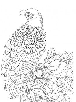 eagle coloring pages for adults at getcolorings free
