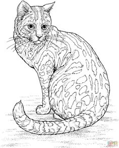 hard owl coloring pages tiger liked wild cat in the wild
