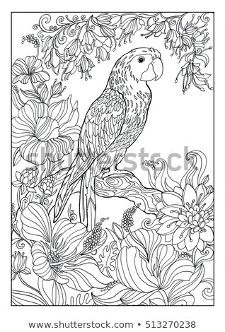 parrot coloring pages adults stock illustration 513270238