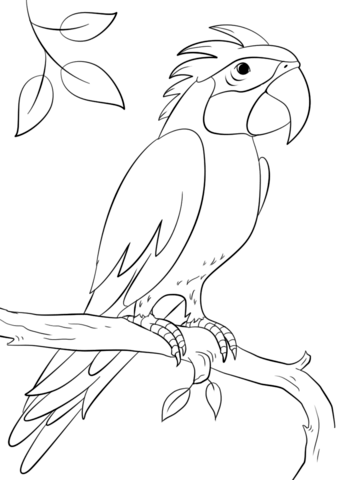 parrot perching on branch coloring page free printable