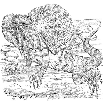 reptile coloring pages yuckles