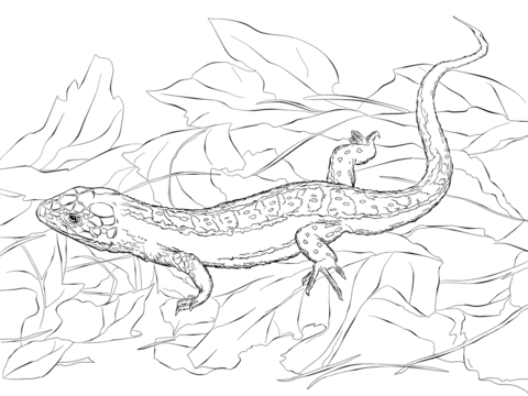 sand lizard coloring page free printable coloring pages