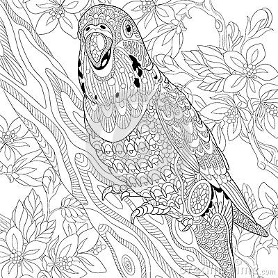 zentangle budgie parrot coloring page more pins like this