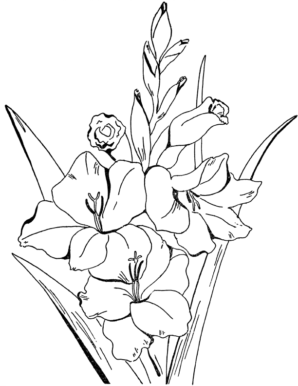 adult flowers coloring page gladiolus the graphics fairy