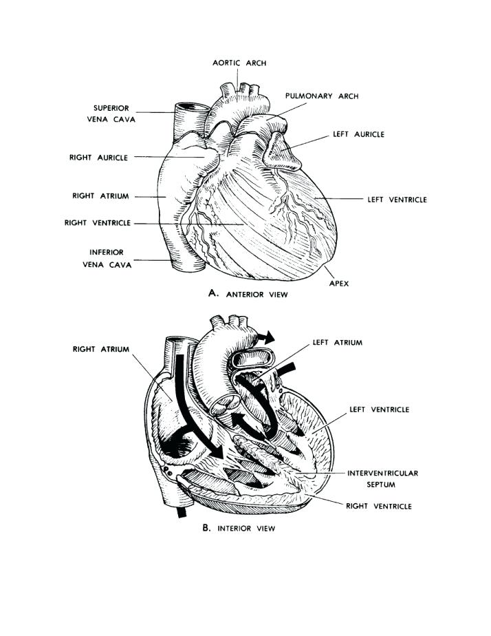- Anatomy Coloring Pages Collection - Whitesbelfast