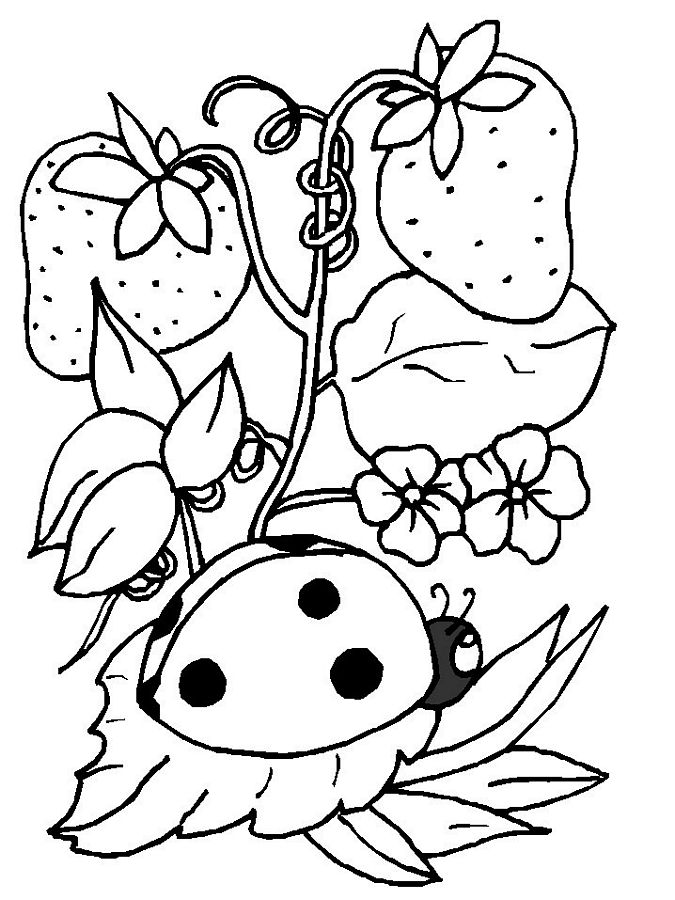 ladybug coloring pages of blank coloring pages