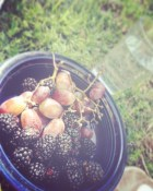 Grapes and blackberries....a luxury for me!