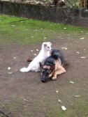 Our dogs...Pip and Cola