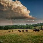 Shenandoah Valley Calendar - July 2017