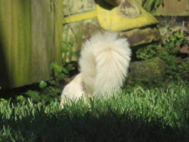 White-Squirrel Kettering Ohio
