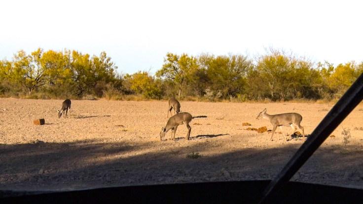 Deer fedding on Record Rack Deer Block