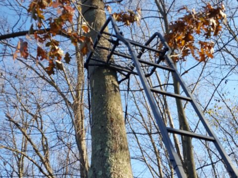 Tree Stand work