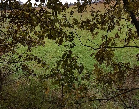 View from tree stand