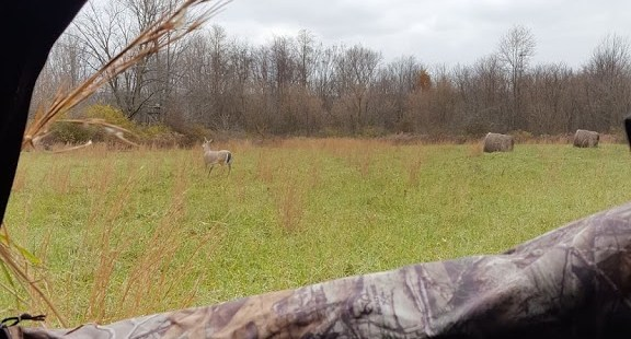 Whitetail Rut-cation Journal 11/10/2018 1