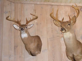 You got that buck of a lifetime, now what?  6 Tips To Help You Care For Your Taxidermy 1