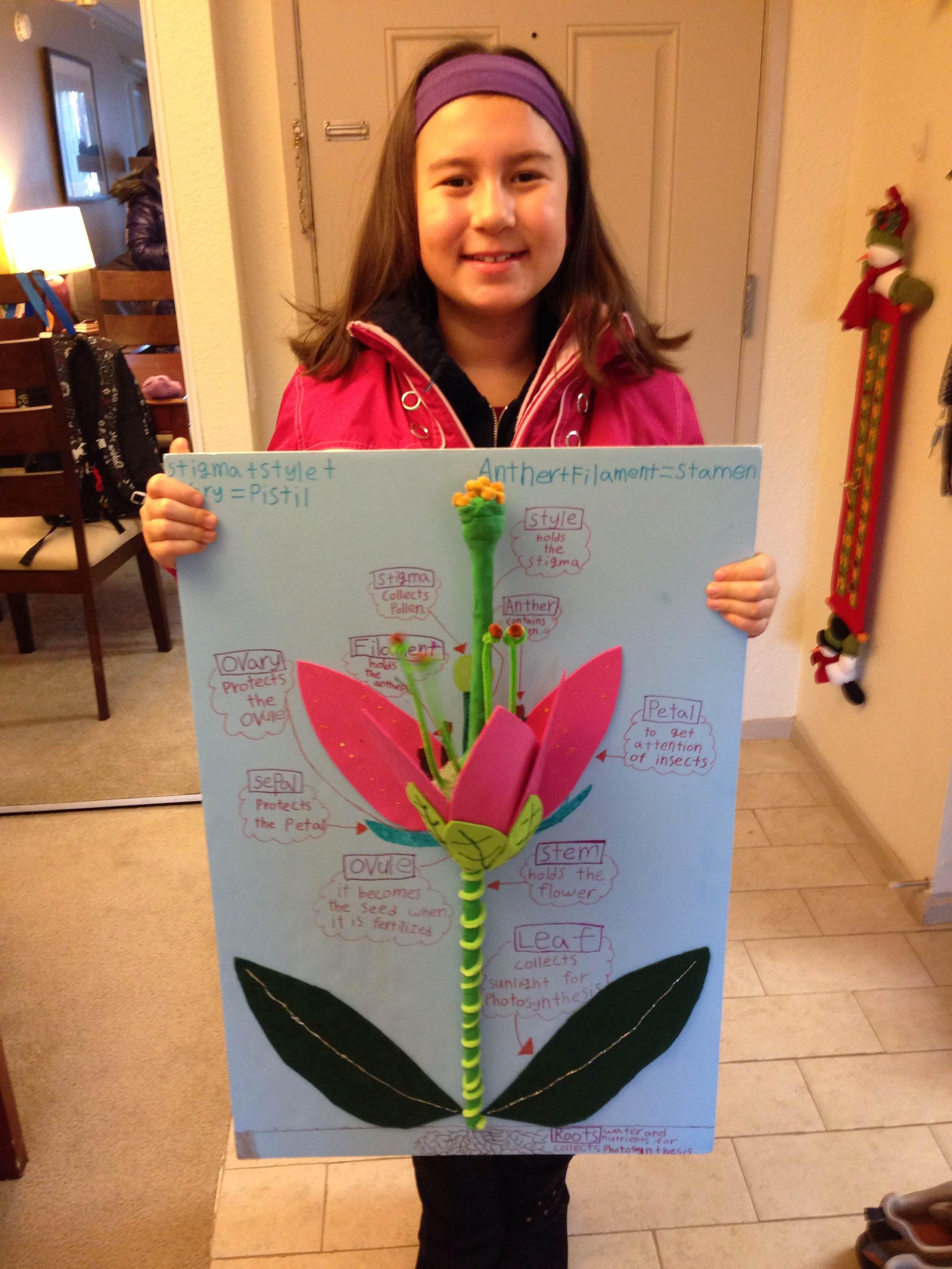 Images About 3d Flower Model