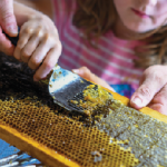 Bees offer sweet support for veterans