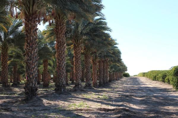 Seaview Citrus and Date Farm