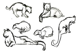 Big Cats studies