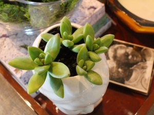 succulent planters, how to plant succulents, recycle old candle jars, three succulent planter ideas for planting succulents, use vintage planters to plant succulents