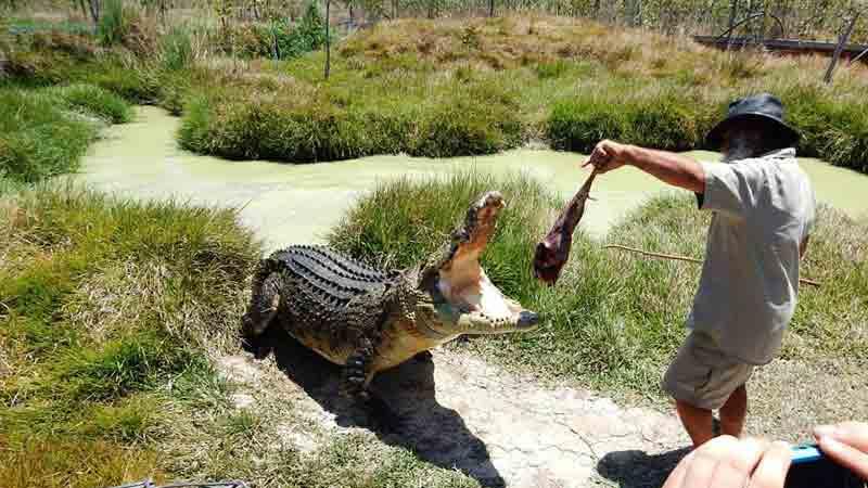 21% off Whitsundays crocodile tour