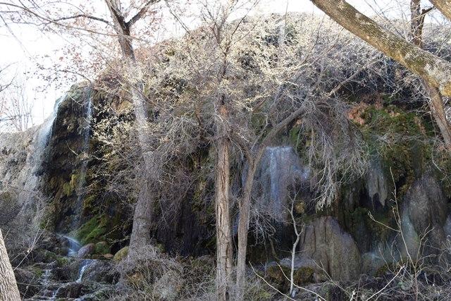Gorman Falls - Small (13)