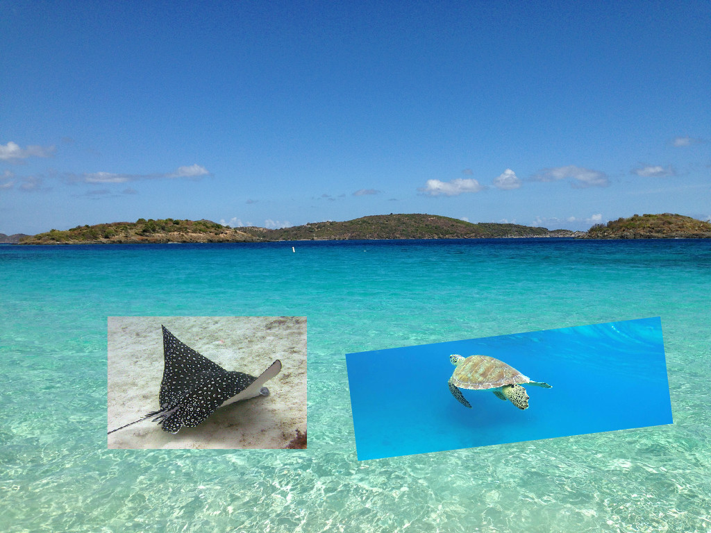 st john turtles sting rays snorkeling